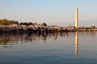 Washington DC Washington Monument reflected in Tidal Basin with Cherry Blossoms