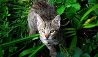young cat in the grass with a bell around the neck