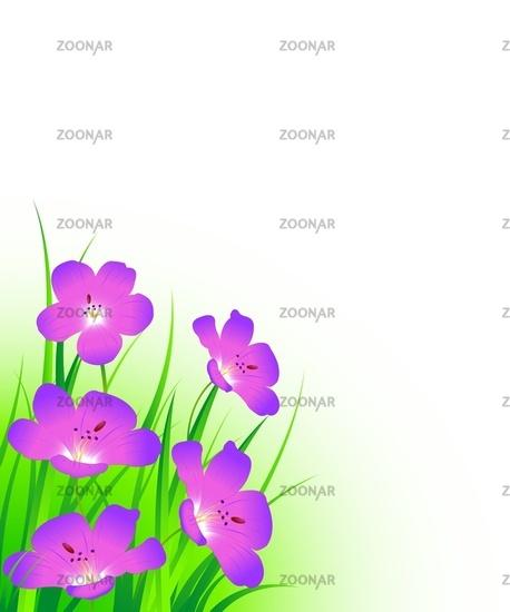 crainsbill flowers