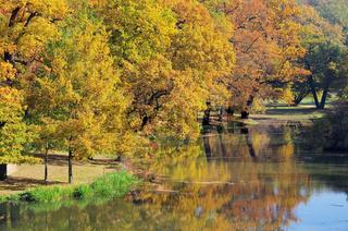 Eiche im Herbst - Oak tree in fall 07