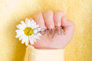 Lovely infant hand with little white daisy