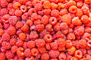 many fresh raspberry