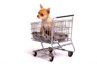 sitzender Welpe im Einkaufswagen