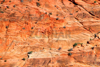 Zion National Park Sandstone Rock