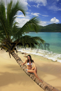 Young woman in bikini sitting on leaning palm tree at Rincon beach