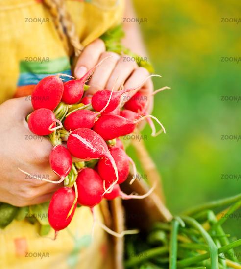 Close-up of ripe radish