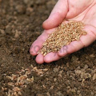 Hand mit Samen