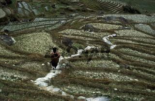 Eine Bauern Frau in der Landschaft des Reisanbau Dorf Longsheng im Bergland der Provinz Hunan in China in Ostasien.