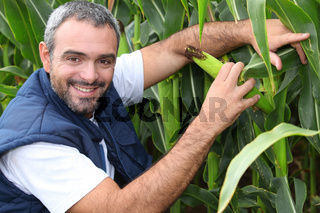 Farmer kneeling by crop