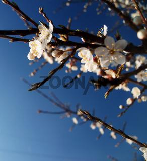 Frühling assoziiert