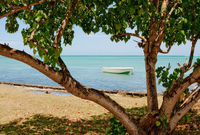 Tree on the beach in Mauritius
