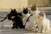 young cats in Greece
