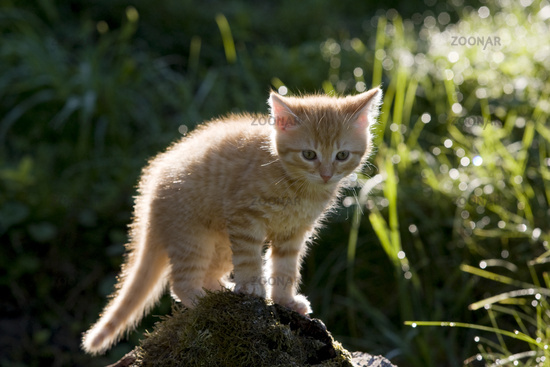 kitten on branch in the back-light
