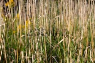 Prairie Vegetation Background