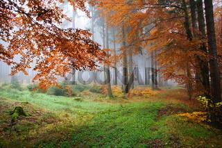 bunter Herbstwald im Nebel