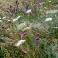 Wind blowing. Wild flowers and grass