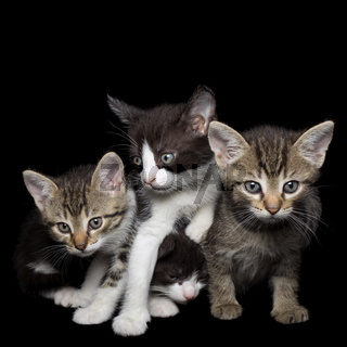 Four Young Cats