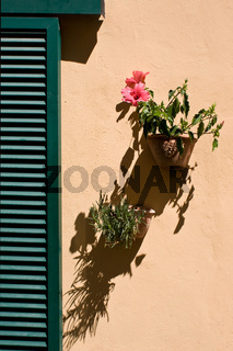 Mediterrane Fensterblume