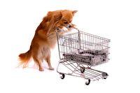 Hund Chihuahua beim Einkaufen