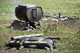 Traditional Tana Toraja animal sacrifice in funeral ceremony