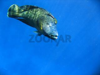 Underwater Life of Great Barrier Reef