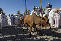merchant with cattle at the livestock market,Nizwa