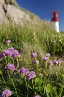 Flowers below a lighthouse