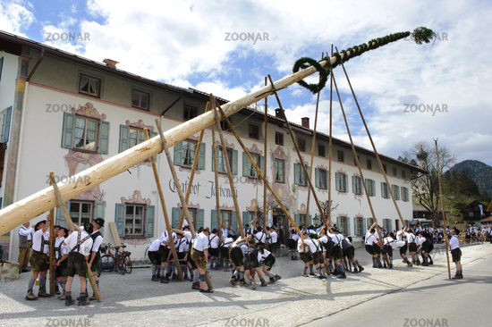 traditional tree erection in bavaria