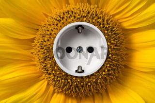 Sonnenblume mit Steckdose