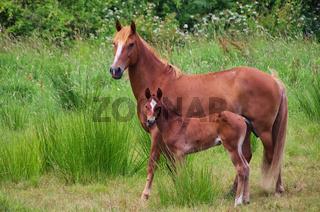 Pferd - horse 10