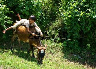 children herd oxen