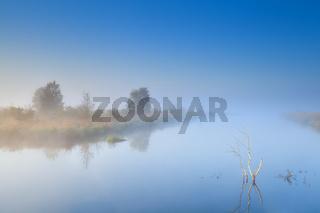 trees on lake in fog
