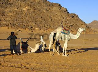 Tuareg Nomaden und Dromedare an einem Lagerplatz in der Wüste