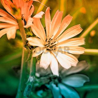 farbenfrohe wildblumen