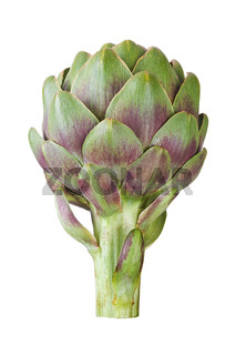 artichoke