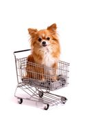 Dog Chihuahua in Shopping cart