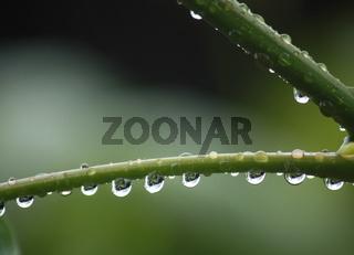Regen, Wassertropfen am Pflanzenstängel