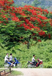 Die Landstrasse 12 beim Dorf Mahaxai Mai von Tham Pa Fa unweit der Stadt Tha Khaek in zentral Laos an der Grenze zu Thailand in Suedostasien.