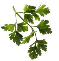 Sprig of parsley