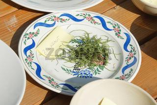 Equisetum arvense, Ackerschachtelhalm, Horsetail, trocknen
