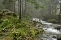 beautiful mountain river in Carpathians forest