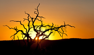 Sonnenuntergang hinter totem Baum