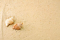 marine snails in the sand