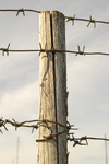 Wooden pole with a prickly wire.