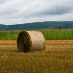 Feld mit Strohballen. Deutschland
