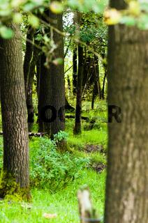 Bäume eines Waldes in frischem Gruen