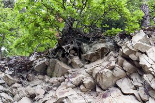 Felsen und Baumwachstum
