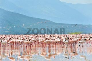 Flamingos im afrikanischen Graben