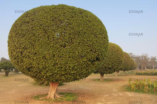 Trees in a garden around Lotus Temple, New Delhi,
