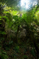 Rainforest landscape. Big plants and trees